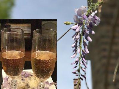 一片紫云两杯香槟——结婚三十四周年纪念日为君做紫藤花晚餐